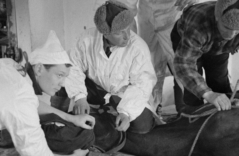 Финские ветеринары. 1940 г.