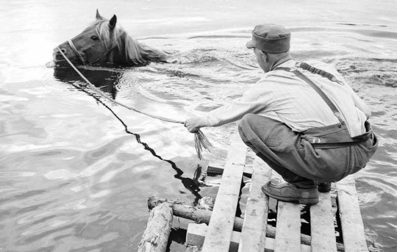 Купание коня. 1943 г.