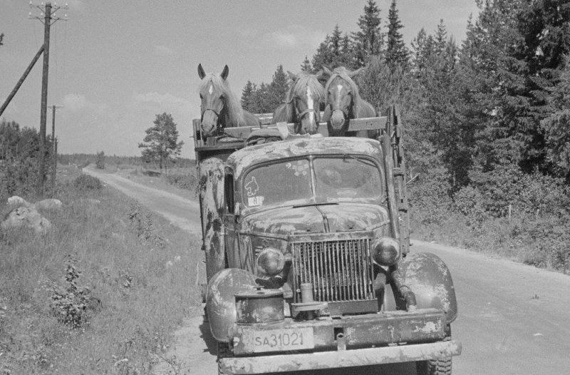 Перевозка лошадей. 1944 г.