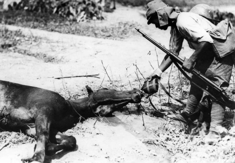 Японский пехотинец поит из фляги лошадь. 1937 г.