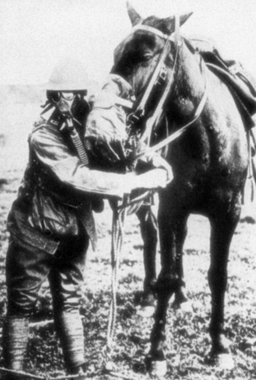 Американский солдат и лошадь в противогазах. 1918 г.