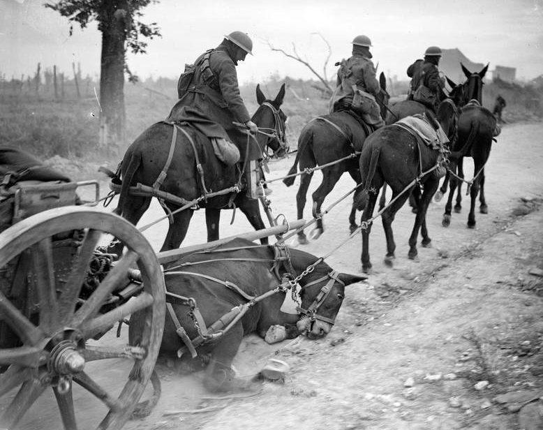 Лошади на Первой мировой войне.
