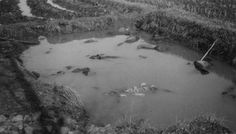Казненные японскими солдатами китайские мирные жители в пруду в окрестностях Нанкина. 1937 г.