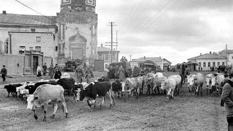 Жители Можайска угоняют скот из зоны предстоящих боев. Октябрь 1941 г.