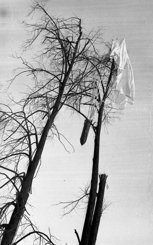 Зависший на дереве контейнер. Февраль 1942 г.