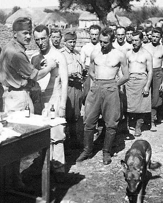 Вакцинация солдат на Донском фронте. Лето 1942 г.