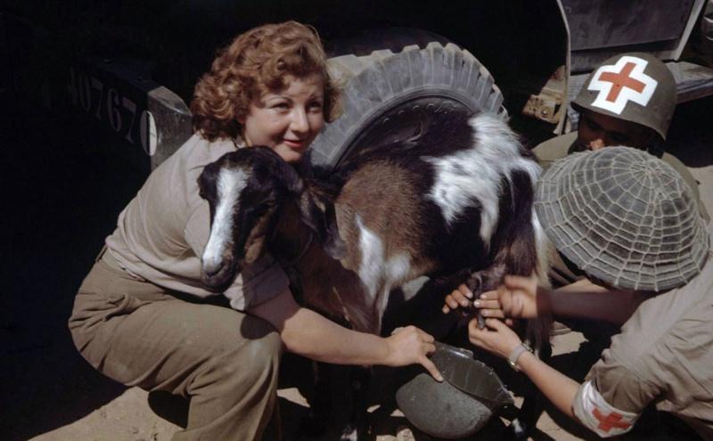 Санитары Французского экспедиционного корпуса доят козу. Италия, 1944 г.