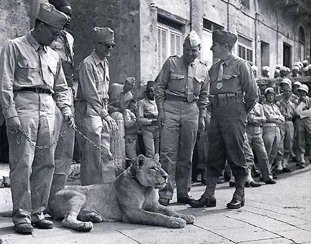 Французы в День взятия Бастилии. Сиена, Италия. 14 июля 1944 г.