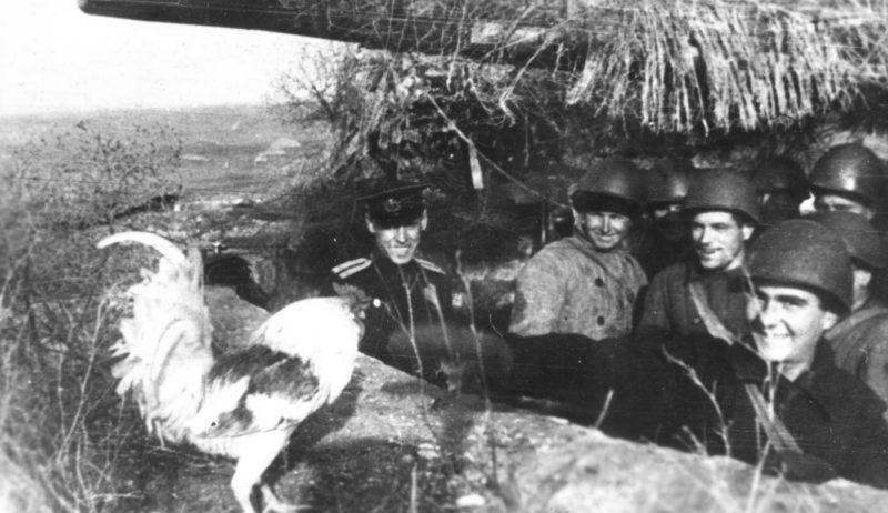 Артиллерийская позиция. Сентябрь 1942 г.