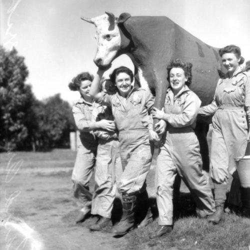 Доставка макета коровы к месту обучения. 1944.