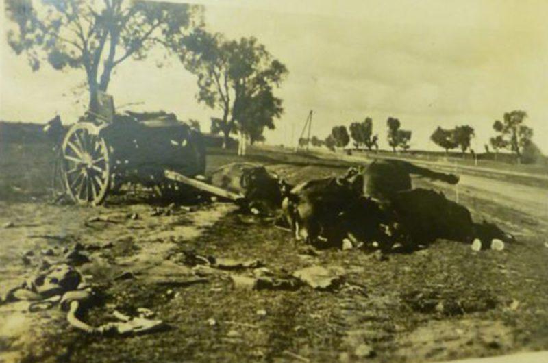 Погибшие конные упряжки советских артиллерийских орудий. Сентябрь 1941 г.