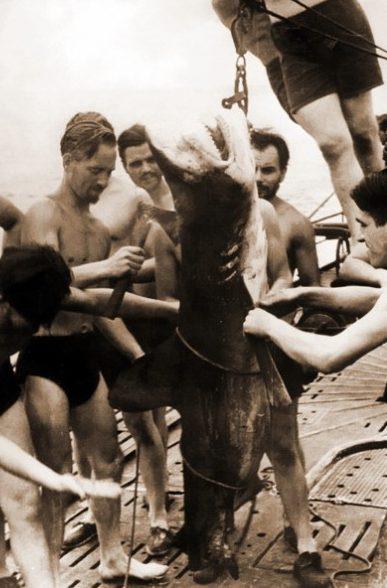 Разделка пойманной акулы на палубе немецкой подлодки в южных широтах.
