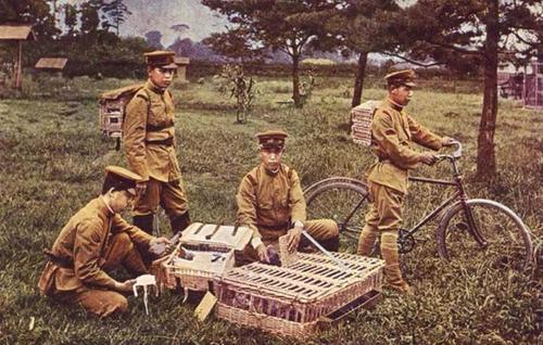 Военные связные, использующие голубей для связи между тренировочными лагерями. Япония, 1936 г.