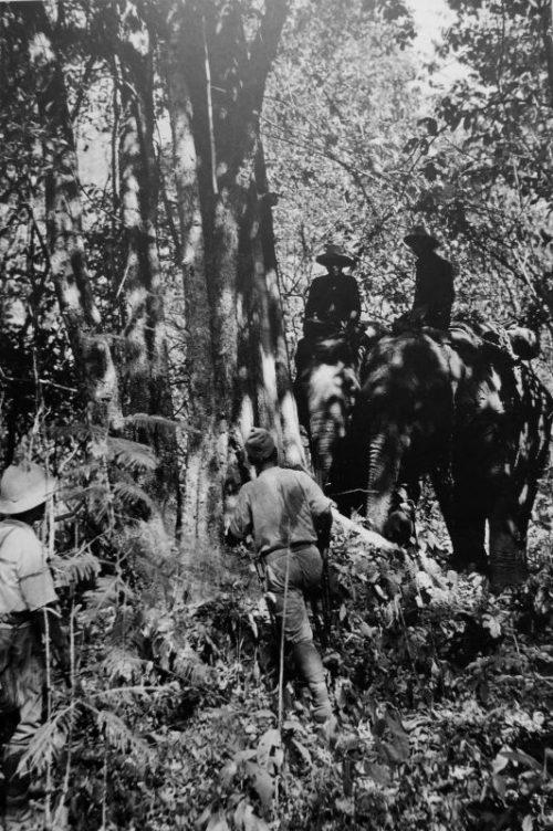 Слоны в японской армии. Бирма 1942 г.