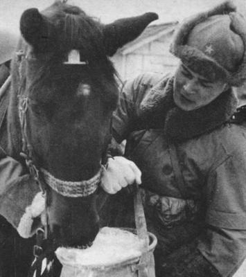Кормление лошади, зима. Хоккайдо 1944 г.