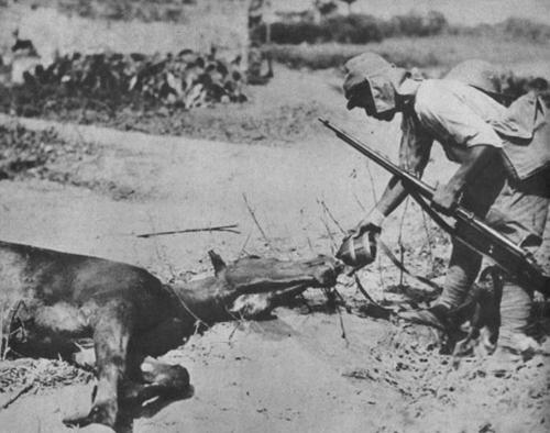 Японский солдат поит с фляги раненную умирающую лошадь. Филиппины, 1942 г.