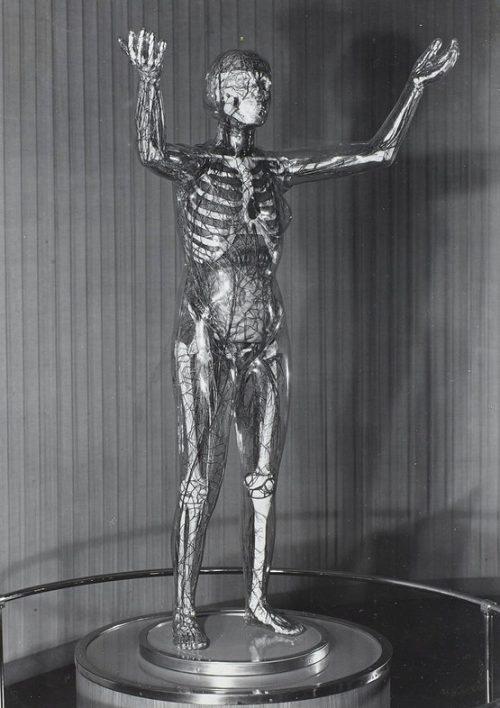 «Стеклянная женщина» в Немецком институте гигиены в Дрездене.