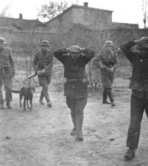 Задержанные партизаны в Псковской области. Пропагандистское фото.1941 г.