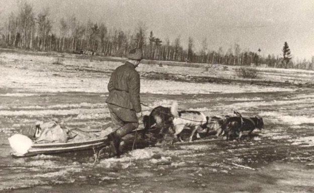 Эвакуация раненных с поля боя под Волховом. 1943 г.