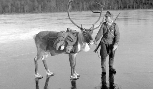 Солдат с оленем на льду возле деревни Наути. 26 октября 1941 г.