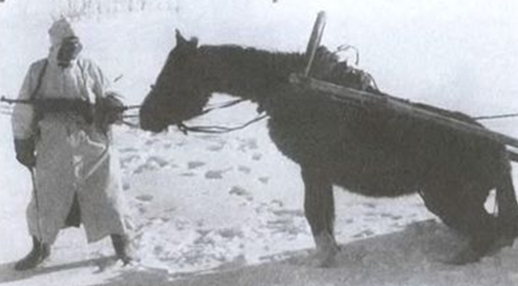 Гужевой транспорт в «котле». Январь 1945 г.
