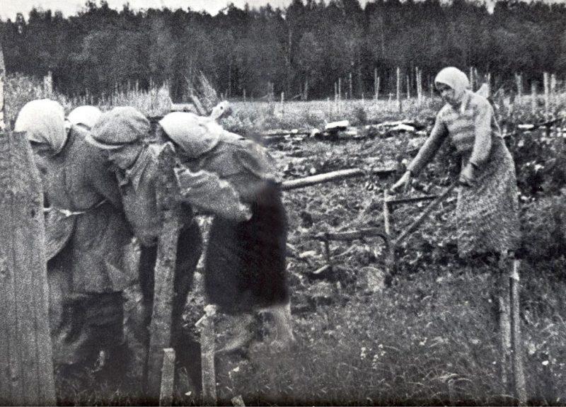 Пахота на себе. 1943 г.