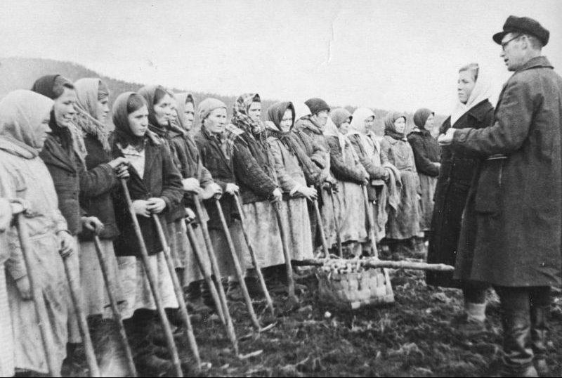 Жительницы Мурманской области на уборке урожая. 1943 г.