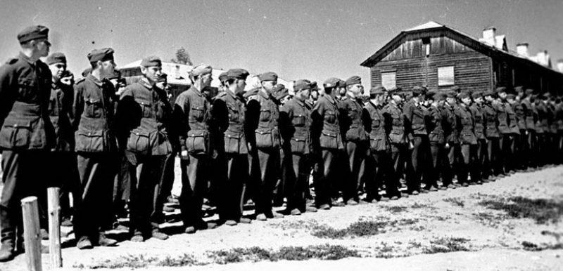 Немецкие, итальянские, румынские солдаты – военнопленные лагеря №165 в строю на поверке. Талицы Южского района Ивановской области, 1943 г.