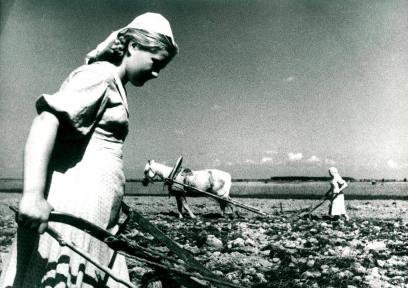 Основные плательщики сельхозналога.