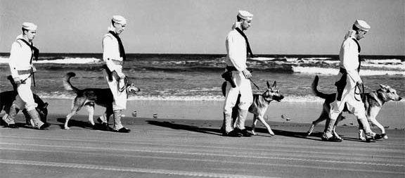 Патруль береговой охраны с собаками. 1941 г.