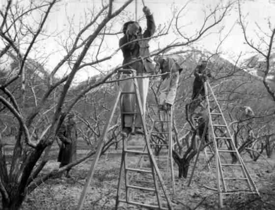 Немецкие военнопленные на садовых работах. Лагерь Огден штат Юта.