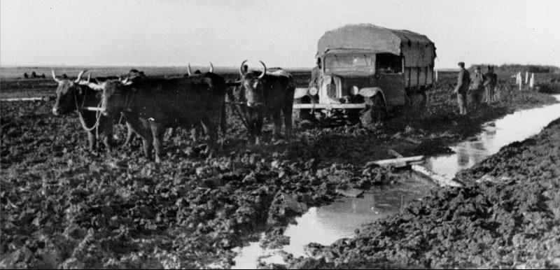 Волы вытаскивают трофейный грузовик «Citroёn Т-45» из грязи на Кубани. Апрель 1943 г.