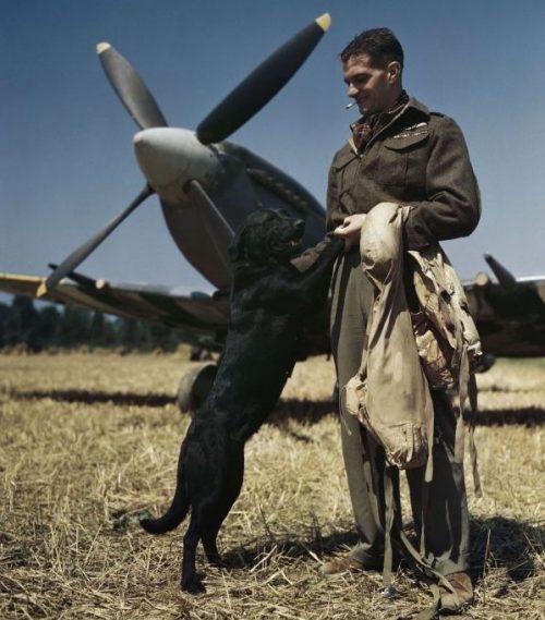 Лучший британский летчик-ас Джеймс «Джонни» Джонсон с лабрадором по кличке Салли. 31 июля 1944 г.